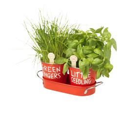 Faites pousser vos fines herbes avec jamie oliver